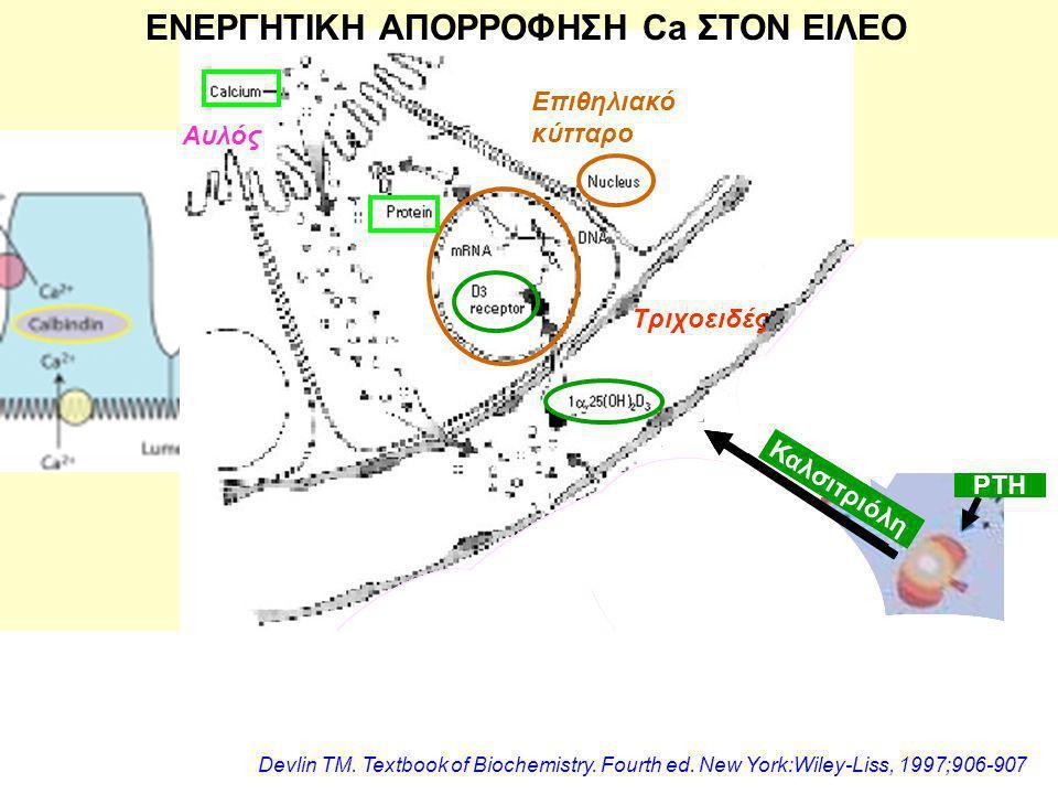 Αυλός Τριχοειδές Επιθηλιακό κύτταρο Καλσιτριόλη ΕΝΕΡΓΗΤΙΚΗ ΑΠΟΡΡΟΦΗΣΗ Ca ΣΤΟΝ ΕΙΛΕΟ ΡΤΗ Καλσιτριόλη Devlin TM.