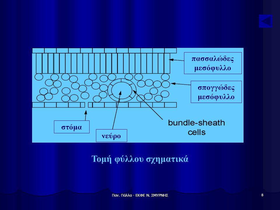 Παν. Πάλλα - ΕΚΦΕ Ν. ΣΜΥΡΝΗΣ 8 Τομή φύλλου σχηματικά στόμα νεύρο σπογγώδες μεσόφυλλο πασσαλώδες μεσόφυλλο
