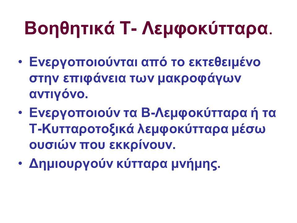 ΣΤΑΔΙΑ ΠΡΩΤΟΓΕΝΟΥΣ ΑΠΟΚΡΙΣΗΣ (Συνέχεια) ΣΤΑΔΙΟ 2-α : Ενεργοποίηση των Β- Λεμφοκυτ- τάρων από τα Τ- Βοηθητικά ( ΧΥΜΙΚΗ ΑΝΟΣΙΑ) –Τα ενεργοποιημένα Β-Λεμφοκύτταρα πολλαπλασιά- ζονται.