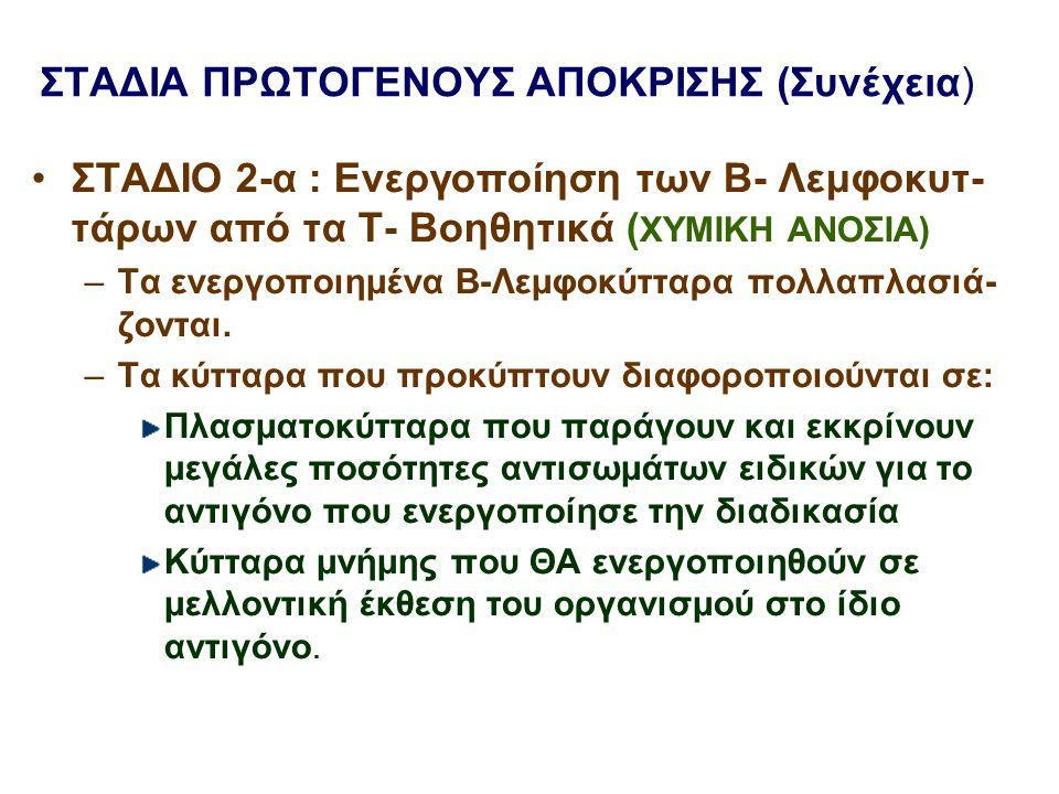 ΣΤΑΔΙΑ ΠΡΩΤΟΓΕΝΟΥΣ ΑΠΟΚΡΙΣΗΣ (Συνέχεια) ΣΤΑΔΙΟ 2-α : Ενεργοποίηση των Β- Λεμφοκυτ- τάρων από τα Τ- Βοηθητικά ( ΧΥΜΙΚΗ ΑΝΟΣΙΑ) –Τα ενεργοποιημένα Β-Λεμ