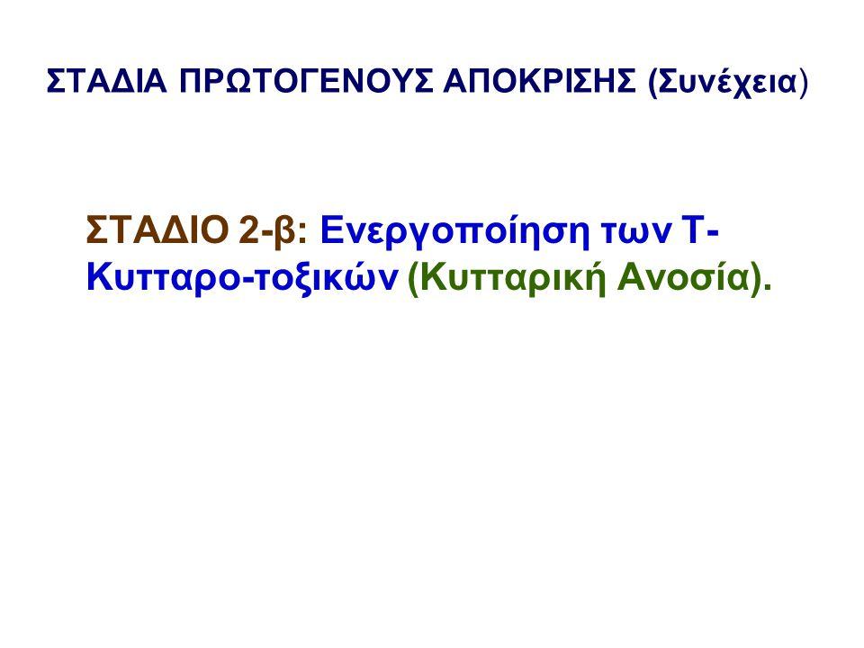 ΣΤΑΔΙΑ ΠΡΩΤΟΓΕΝΟΥΣ ΑΠΟΚΡΙΣΗΣ (Συνέχεια) ΣΤΑΔΙΟ 2-β: Ενεργοποίηση των Τ- Κυτταρο-τοξικών (Κυτταρική Ανοσία).