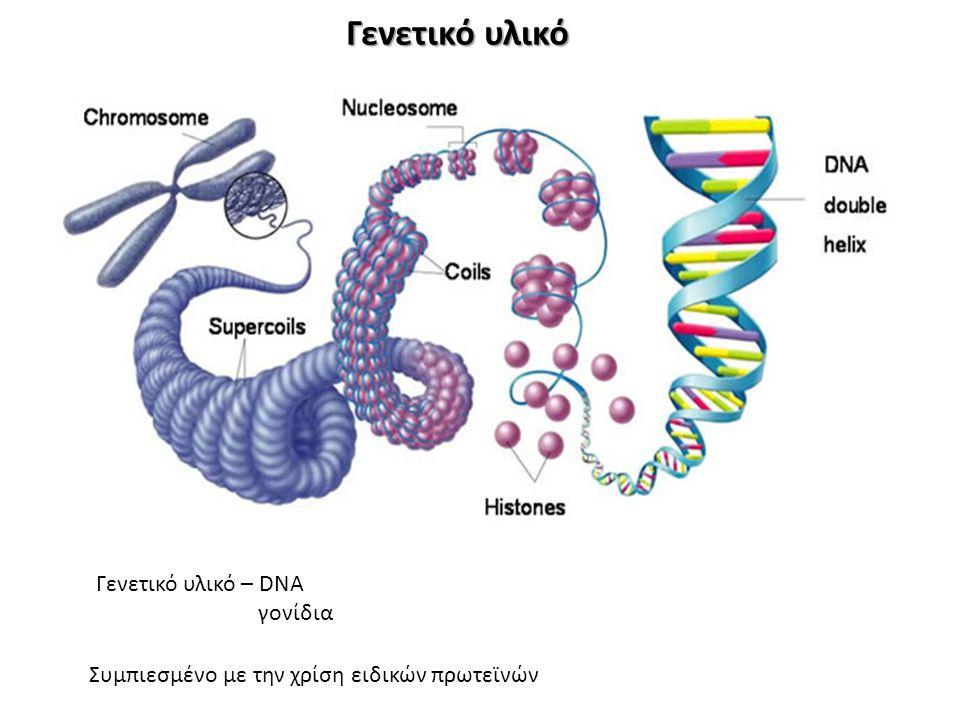 Γενετικό υλικό