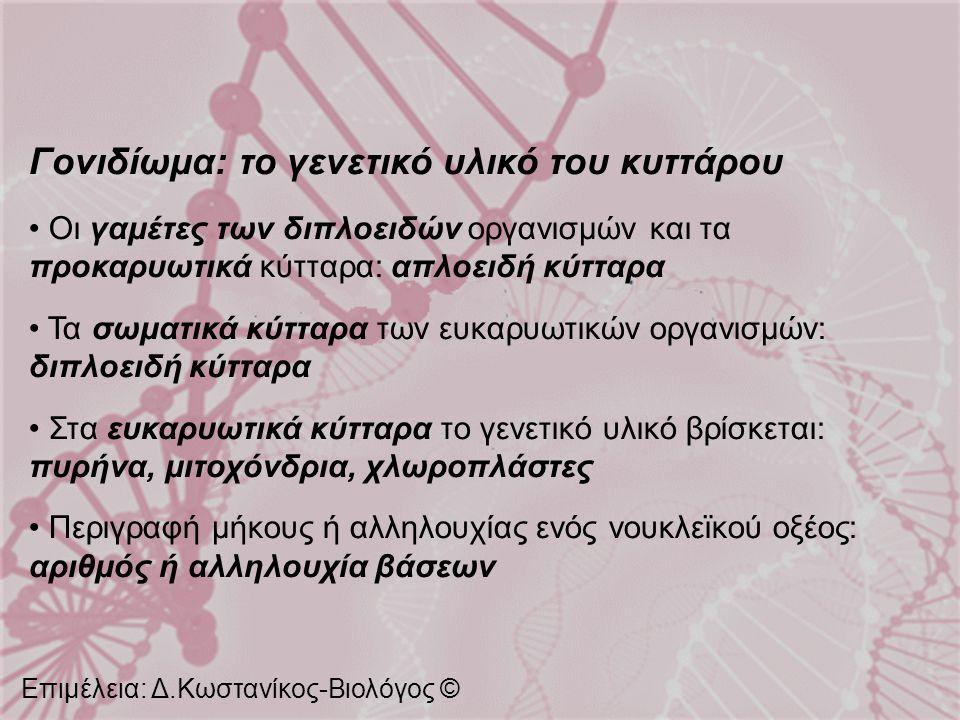 Γονιδίωμα: το γενετικό υλικό του κυττάρου Οι γαμέτες των διπλοειδών οργανισμών και τα προκαρυωτικά κύτταρα: απλοειδή κύτταρα Τα σωματικά κύτταρα των ε