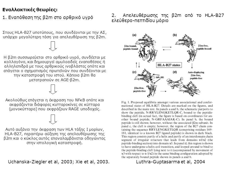 Εναλλακτικές θεωρίες: 1. Εναπόθεση της β2m στο αρθρικό υγρό Στους HLA-B27 υποτύπους, που συνδέονται με την ΑΣ, υπάρχει μεγαλύτερη τάση για απελευθέρωσ