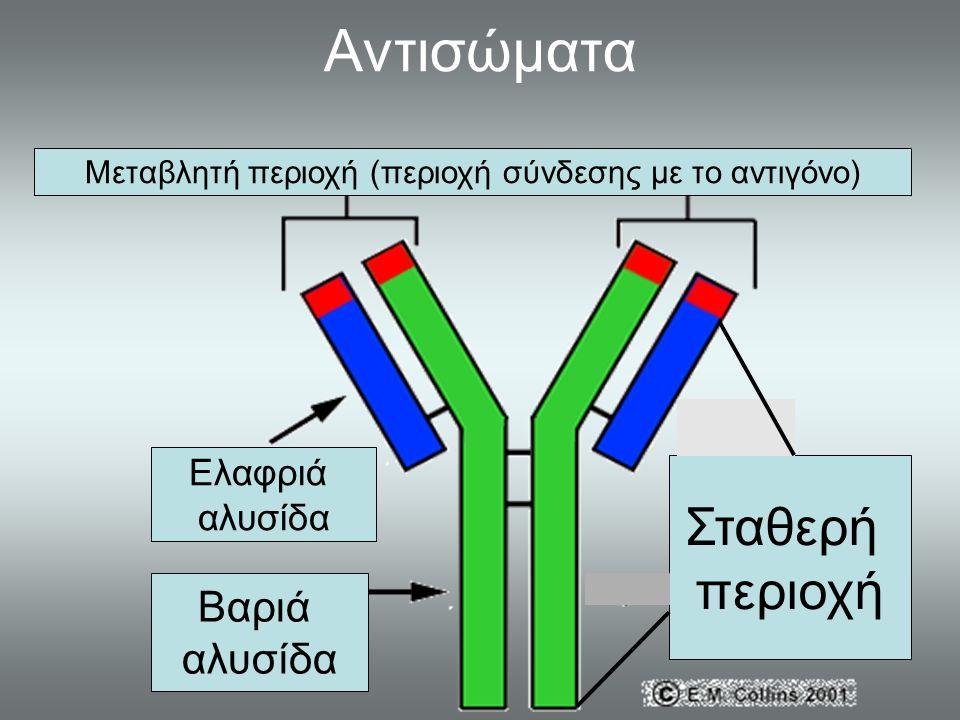 Αντισώματα Μεταβλητή περιοχή (περιοχή σύνδεσης με το αντιγόνο) Ελαφριά αλυσίδα Βαριά αλυσίδα Σταθερή περιοχή