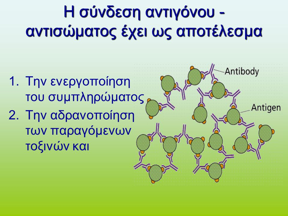 Η σύνδεση αντιγόνου - αντισώματος έχει ως αποτέλεσμα 1.Την ενεργοποίηση του συμπληρώματος 2.Την αδρανοποίηση των παραγόμενων τοξινών και