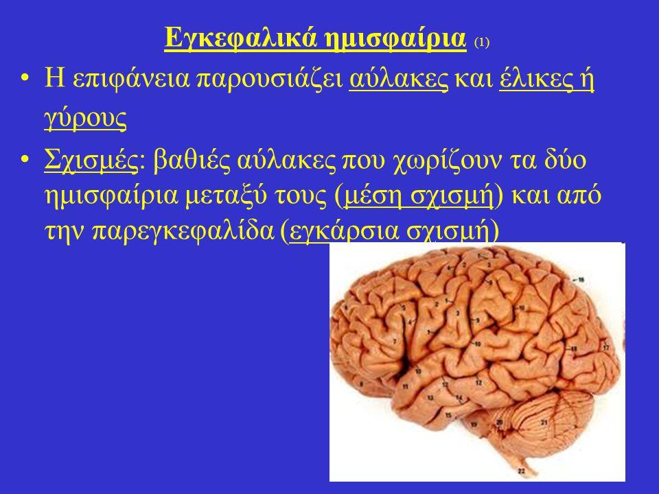 17 Εγκεφαλικά ημισφαίρια (1) Η επιφάνεια παρουσιάζει αύλακες και έλικες ή γύρους Σχισμές: βαθιές αύλακες που χωρίζουν τα δύο ημισφαίρια μεταξύ τους (μέση σχισμή) και από την παρεγκεφαλίδα (εγκάρσια σχισμή)