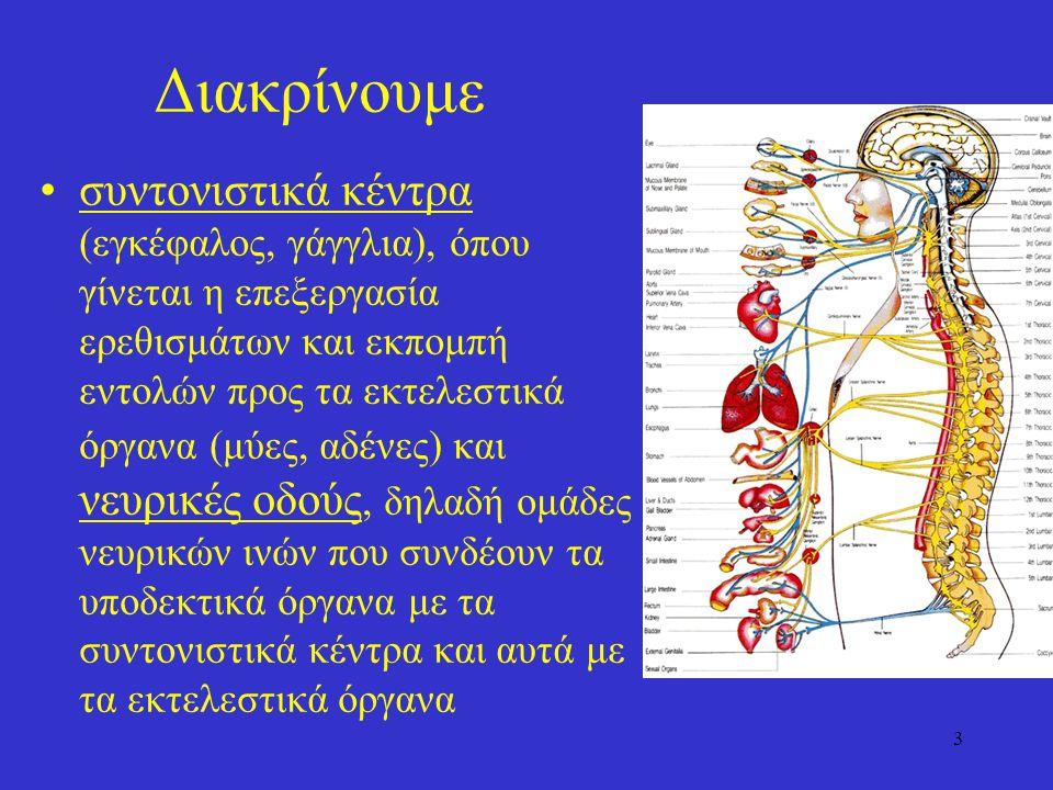 3 Διακρίνουμε συντονιστικά κέντρα (εγκέφαλος, γάγγλια), όπου γίνεται η επεξεργασία ερεθισμάτων και εκπομπή εντολών προς τα εκτελεστικά όργανα (μύες, αδένες) και νευρικές οδούς, δηλαδή ομάδες νευρικών ινών που συνδέουν τα υποδεκτικά όργανα με τα συντονιστικά κέντρα και αυτά με τα εκτελεστικά όργανα