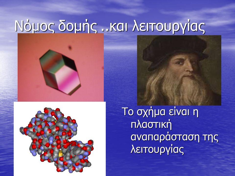 Νόμος δομής..και λειτουργίας Το σχήμα είναι η πλαστική αναπαράσταση της λειτουργίας