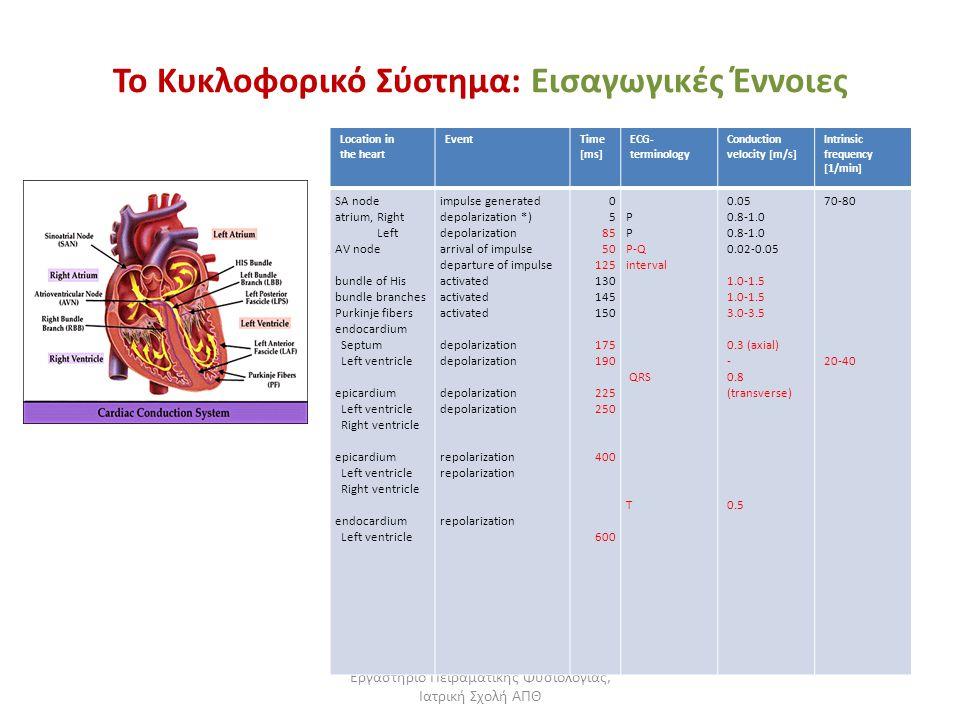Εργαστήριο Πειραματικής Φυσιολογίας, Ιατρική Σχολή ΑΠΘ Το Κυκλοφορικό Σύστημα: Εισαγωγικές Έννοιες Το δεμάτιο του His (βέλος) Location in the heart Ev