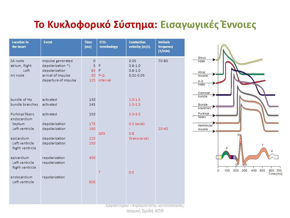 Εργαστήριο Πειραματικής Φυσιολογίας, Ιατρική Σχολή ΑΠΘ Το Κυκλοφορικό Σύστημα: Εισαγωγικές Έννοιες Location in the heart EventTime [ms] ECG- terminolo