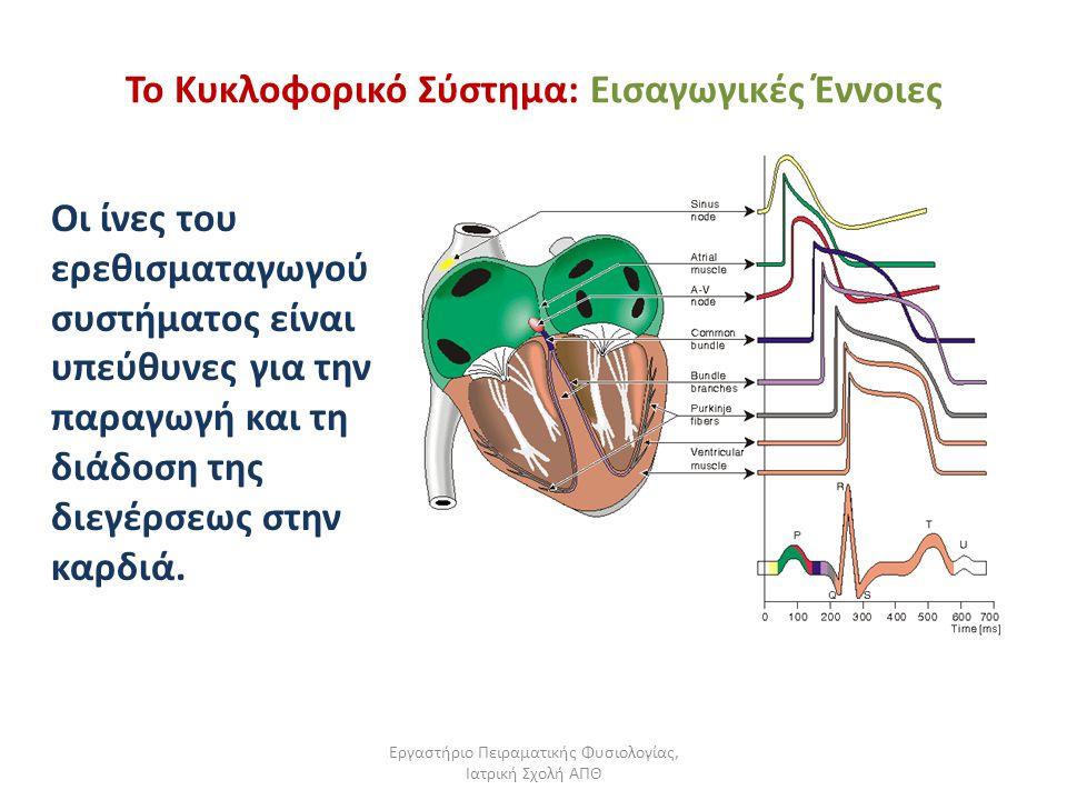 Εργαστήριο Πειραματικής Φυσιολογίας, Ιατρική Σχολή ΑΠΘ Το Κυκλοφορικό Σύστημα: Εισαγωγικές Έννοιες Οι ίνες του ερεθισματαγωγού συστήματος είναι υπεύθυ