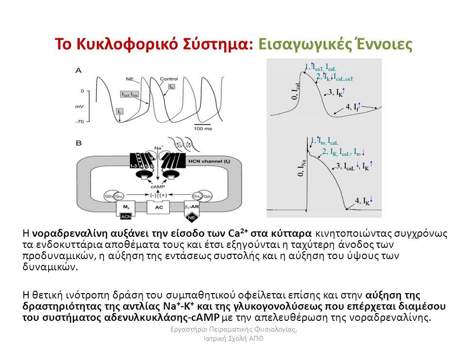 Εργαστήριο Πειραματικής Φυσιολογίας, Ιατρική Σχολή ΑΠΘ Το Κυκλοφορικό Σύστημα: Εισαγωγικές Έννοιες Η νοραδρεναλίνη αυξάνει την είσοδο των Ca 2+ στα κύ
