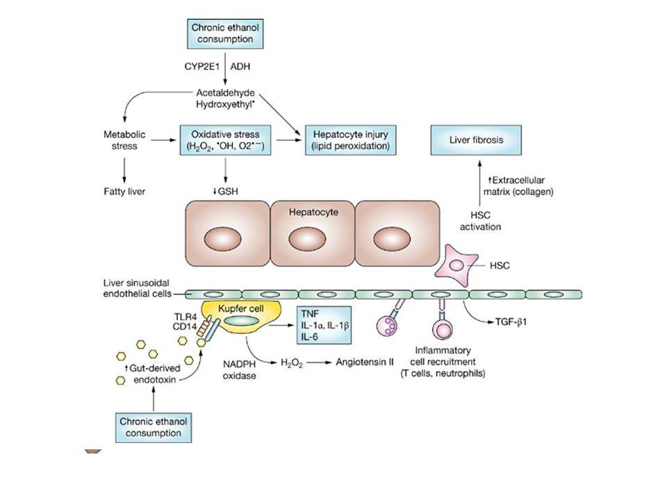 1.Yπογκαιμία εξαιτίας αυξημένης διούρησης (αντίσταση στη δράση της ADH, ↓ τονικότητα μυελού) 2.Hπατονεφρικό συνδρόμο (υπάρδευση του νεφρού) 3.Τοξικής δράση της αιθανόλης στους μύες (μυοσφαιρίνη) ONB XNN 1.Ατροφία των σωληναρίων 2.Ινωση στο διάμεσο - σωληναριακό χώρο Αιθανόλη & νεφρική βλάβη