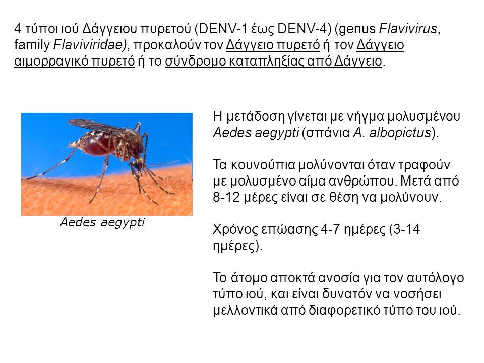 Η μετάδοση γίνεται με νήγμα μολυσμένου Aedes aegypti (σπάνια A. albopictus). Τα κουνούπια μολύνονται όταν τραφούν με μολυσμένο αίμα ανθρώπου. Μετά από