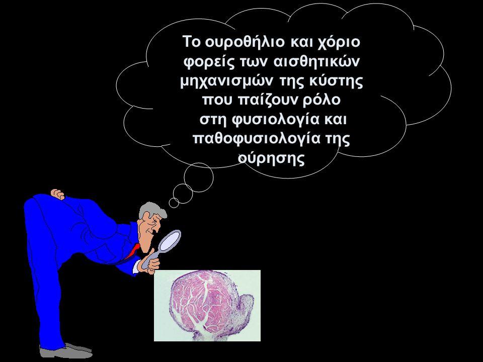 Το ουροθήλιο και χόριο φορείς των αισθητικών μηχανισμών της κύστης που παίζουν ρόλο στη φυσιολογία και παθοφυσιολογία της ούρησης