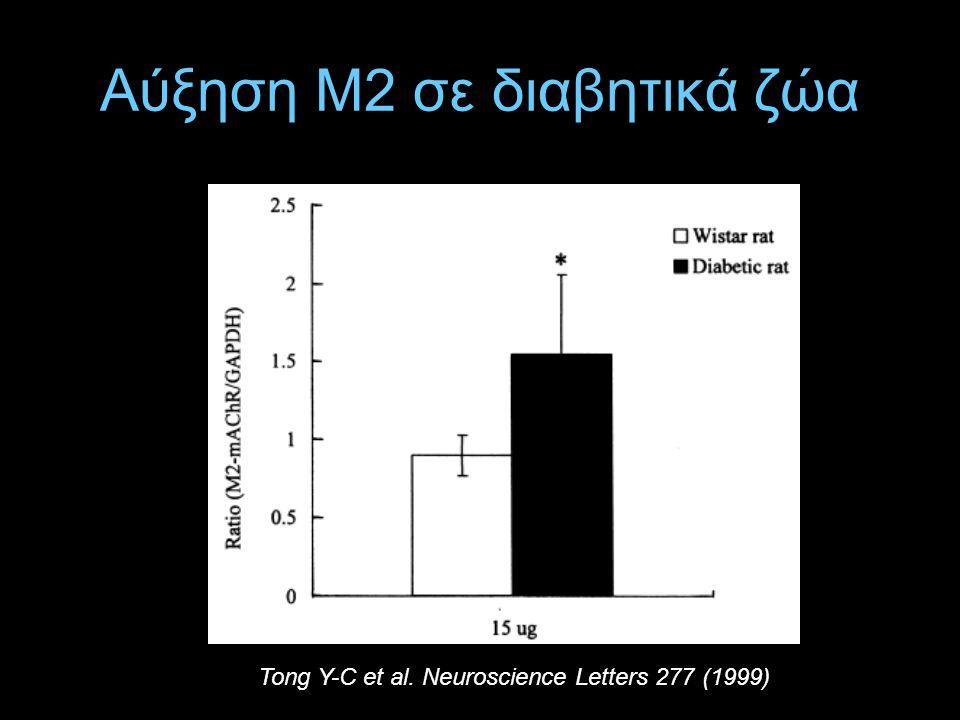 Αύξηση Μ2 σε διαβητικά ζώα Tong Y-C et al. Neuroscience Letters 277 (1999)