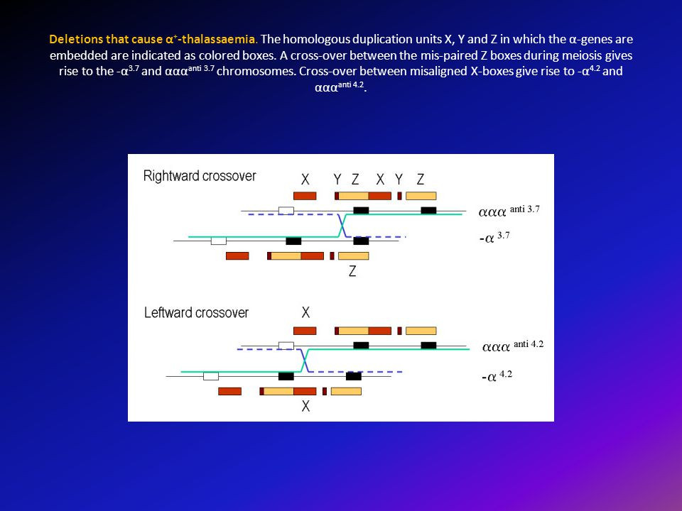 Deletions that cause α + -thalassaemia. The homologous duplication units X, Y and Z in which the α-genes are embedded are indicated as colored boxes.