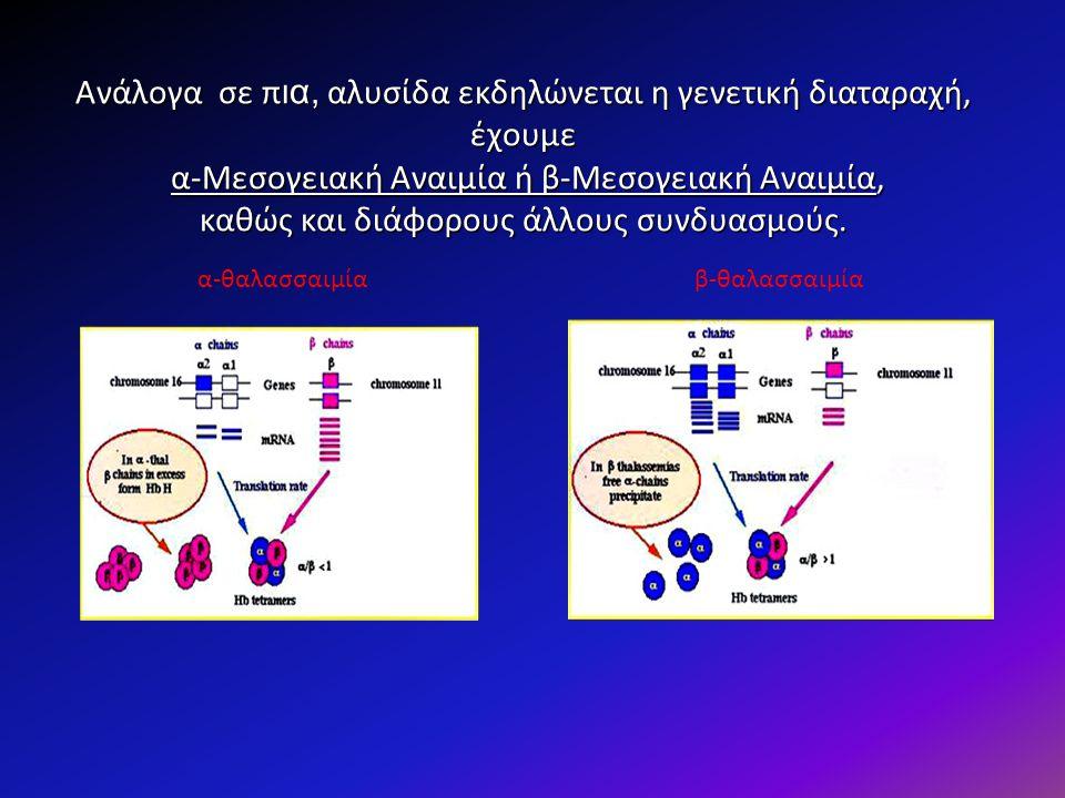 Δρεπανοκυτταρικά Σύνδρομα Οφείλεται σε σημειακή μετάλλαξη (GAG-GTG) Οφείλεται σε σημειακή μετάλλαξη (GAG-GTG) Αντικατάσταση του γλουταμινικού οξέος από βαλίνη στη θέση 6 της β πολυπεπτιδικής αλυσίδας και τη σύνθεση Αντικατάσταση του γλουταμινικού οξέος από βαλίνη στη θέση 6 της β πολυπεπτιδικής αλυσίδας και τη σύνθεση της Hb S της Hb S Αυτή η μετάλλαξη οδηγεί σε αλλαγή της στερεοδιάταξης της αιμοσφαιρίνης, η οποία έχει ως αποτέλεσμα την αλλαγή της μορφής των ερυθροκυττάρων, (δύσκαμπτη ανελαστική μεμβράνη) τα οποία, σε συνθήκες έλλειψης οξυγόνου, παίρνουν χαρακτηριστικό δρεπανοειδές σχήμα Αυτή η μετάλλαξη οδηγεί σε αλλαγή της στερεοδιάταξης της αιμοσφαιρίνης, η οποία έχει ως αποτέλεσμα την αλλαγή της μορφής των ερυθροκυττάρων, (δύσκαμπτη ανελαστική μεμβράνη) τα οποία, σε συνθήκες έλλειψης οξυγόνου, παίρνουν χαρακτηριστικό δρεπανοειδές σχήμα