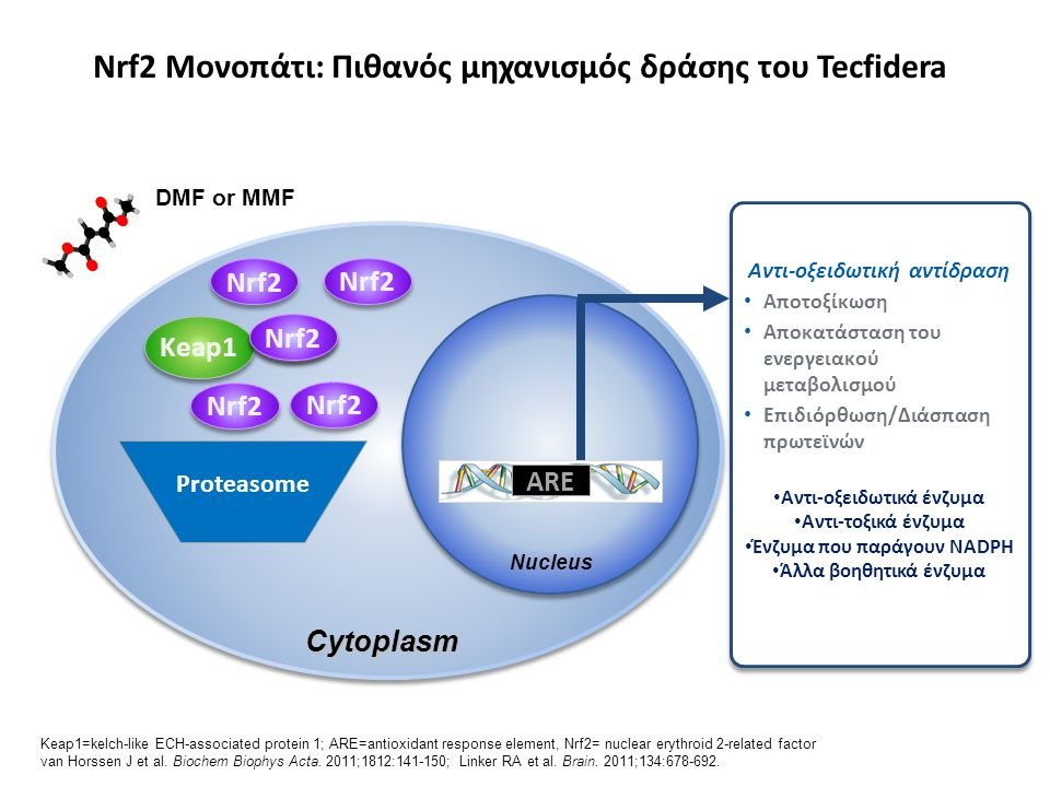 Nrf2 Μονοπάτι: Πιθανός μηχανισμός δράσης του Tecfidera Keap1=kelch-like ECH-associated protein 1; ARE=antioxidant response element, Nrf2= nuclear eryt
