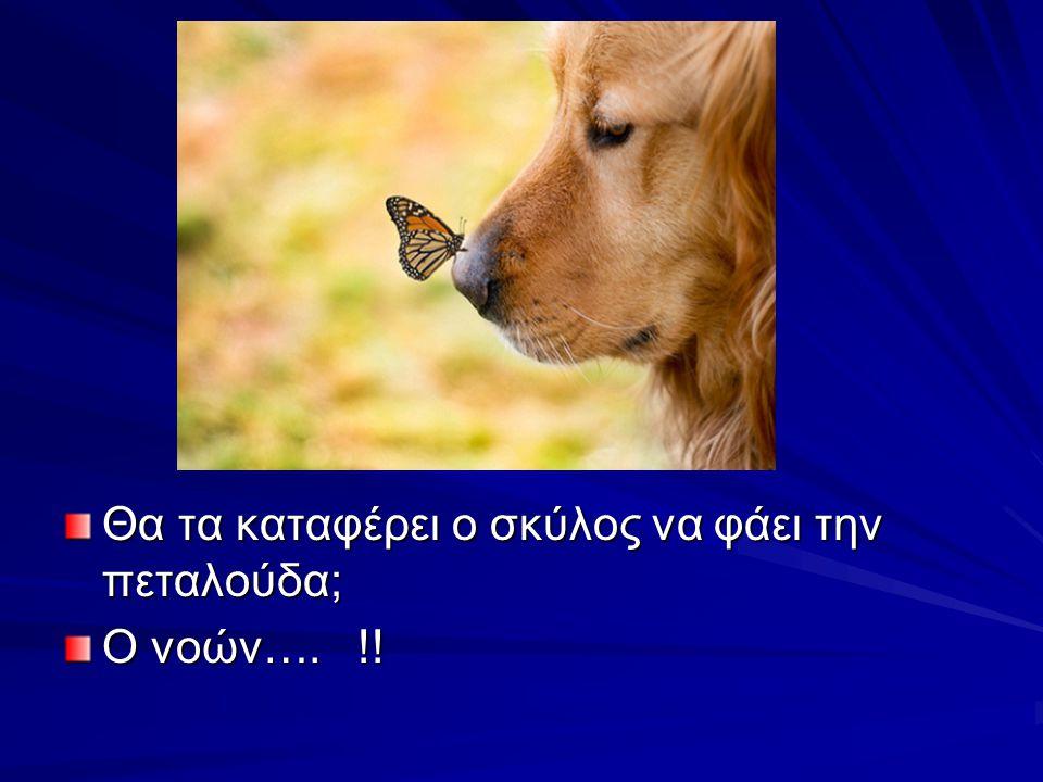 Θα τα καταφέρει ο σκύλος να φάει την πεταλούδα; Ο νοών…. !!