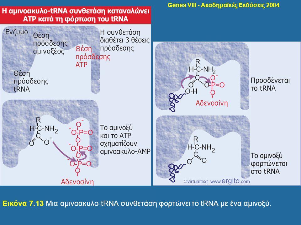 Genes VIII - Ακαδημαϊκές Εκδόσεις 2004 Εικόνα 7.13 Μια αμινοακυλο-tRNA συνθετάση φορτώνει το tRNA με ένα αμινοξύ.