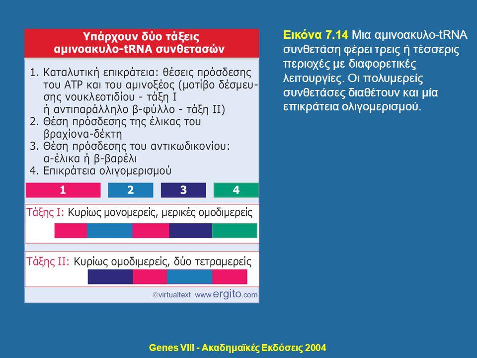 Genes VIII - Ακαδημαϊκές Εκδόσεις 2004 Εικόνα 7.14 Μια αμινοακυλο-tRNA συνθετάση φέρει τρεις ή τέσσερις περιοχές με διαφορετικές λειτουργίες. Οι πολυμ