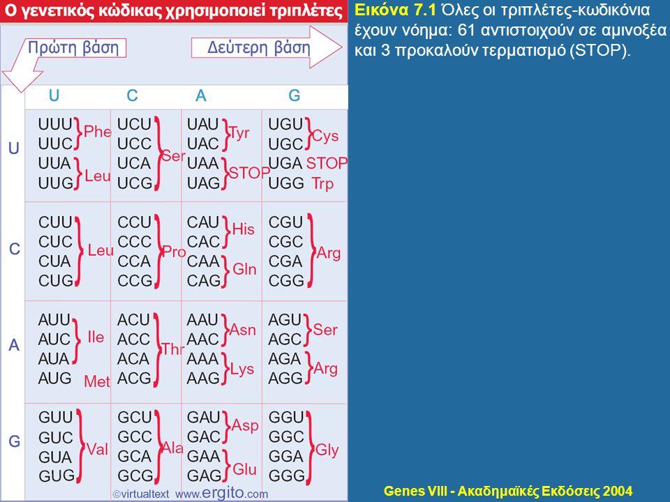 Εικόνα 7.1 Όλες οι τριπλέτες-κωδικόνια έχουν νόημα: 61 αντιστοιχούν σε αμινοξέα και 3 προκαλούν τερματισμό (STOP).