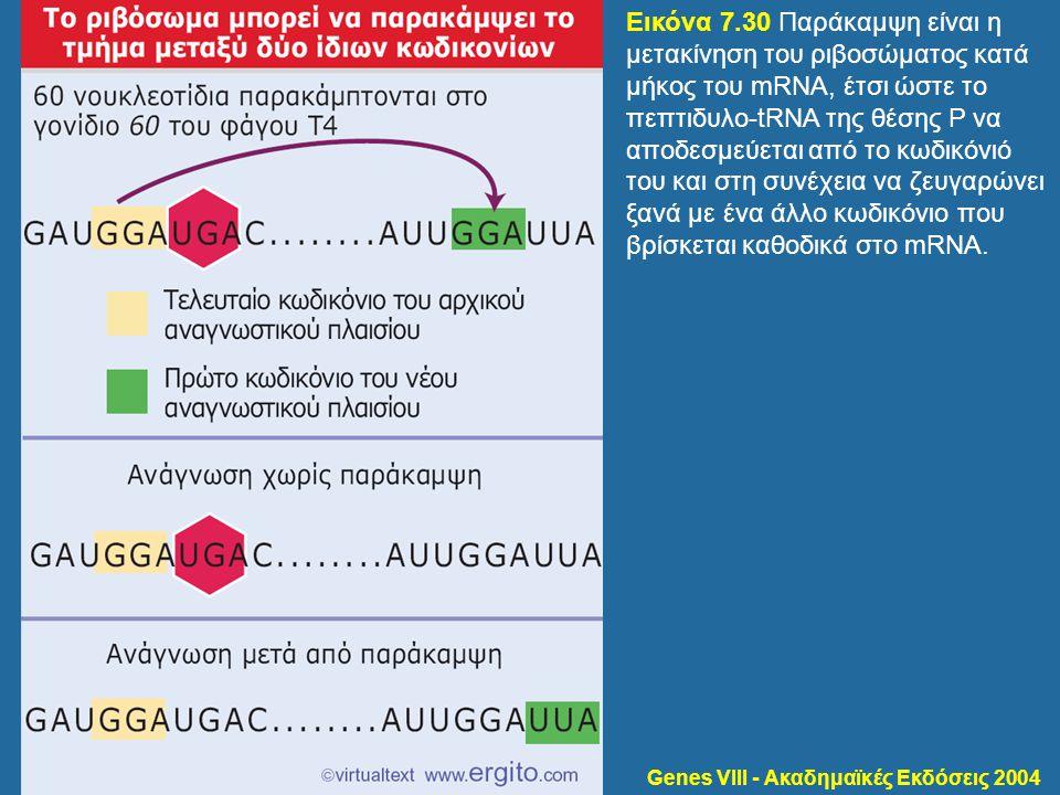 Genes VIII - Ακαδημαϊκές Εκδόσεις 2004 Εικόνα 7.30 Παράκαμψη είναι η μετακίνηση του ριβοσώματος κατά μήκος του mRNA, έτσι ώστε το πεπτιδυλο-tRNA της θ
