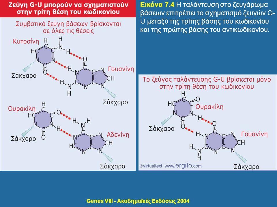 Genes VIII - Ακαδημαϊκές Εκδόσεις 2004 Εικόνα 7.5 Το ζευγάρωμα κωδικονίου-αντικωδικονίου περιλαμβάνει ταλάντευση στην τρίτη θέση.
