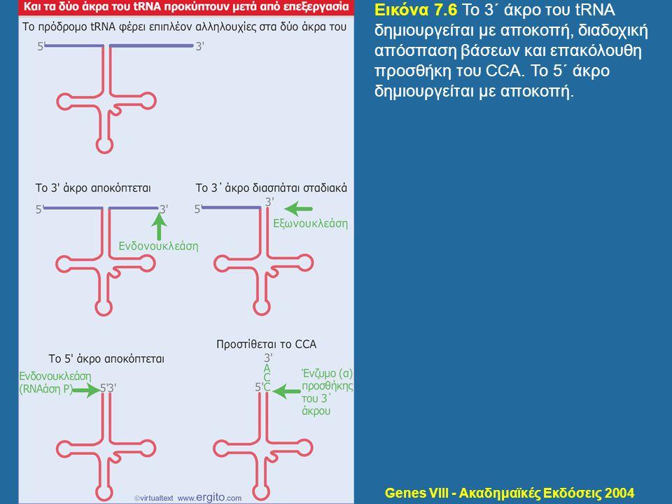 Genes VIII - Ακαδημαϊκές Εκδόσεις 2004 Εικόνα 7.6 Το 3΄ άκρο του tRNA δημιουργείται με αποκοπή, διαδοχική απόσπαση βάσεων και επακόλουθη προσθήκη του