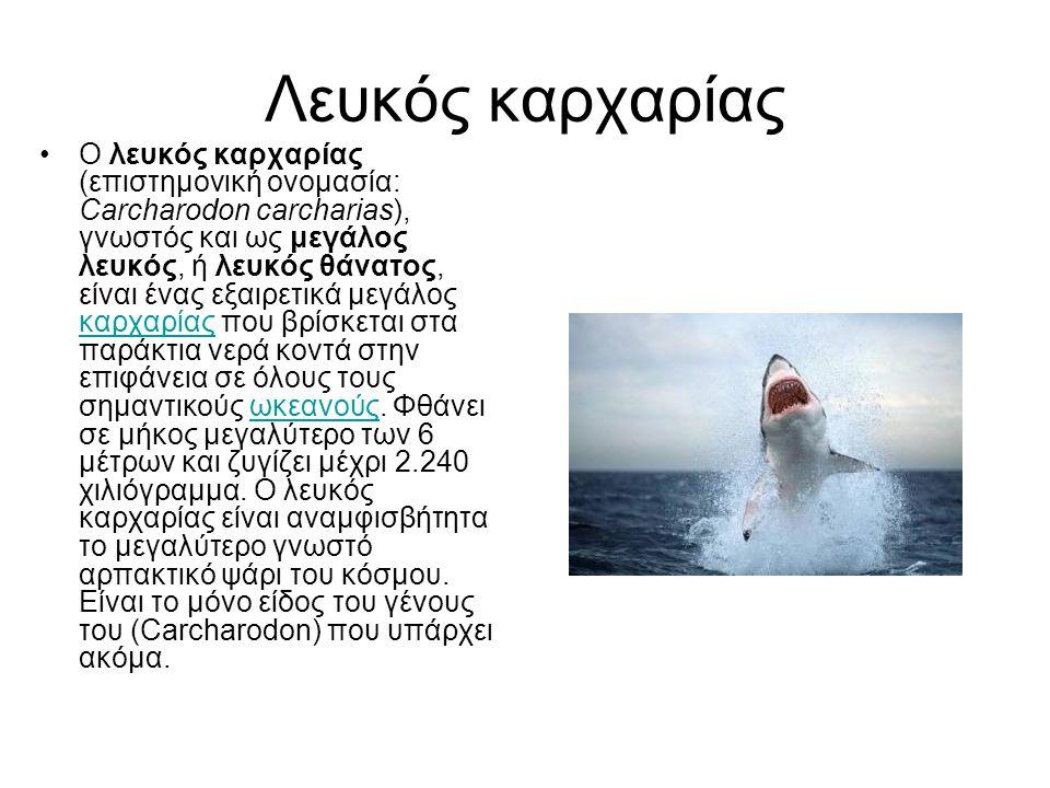 Λευκός καρχαρίας Ο λευκός καρχαρίας (επιστημονική ονομασία: Carcharodon carcharias), γνωστός και ως μεγάλος λευκός, ή λευκός θάνατος, είναι ένας εξαιρ