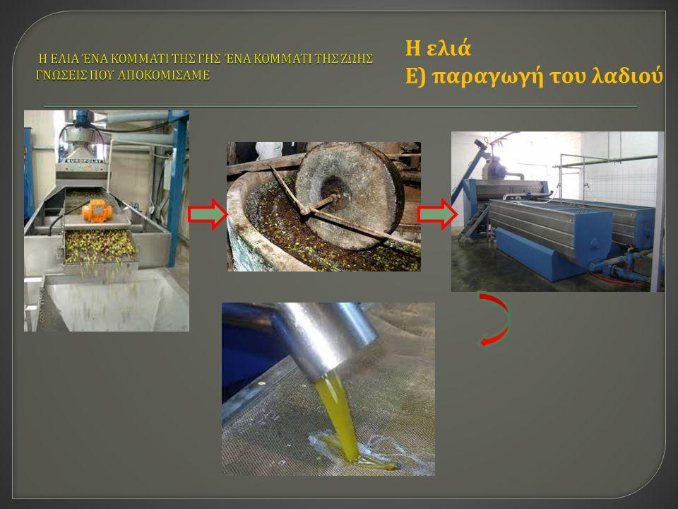 Η ελιά Ε ) παραγωγή του λαδιού