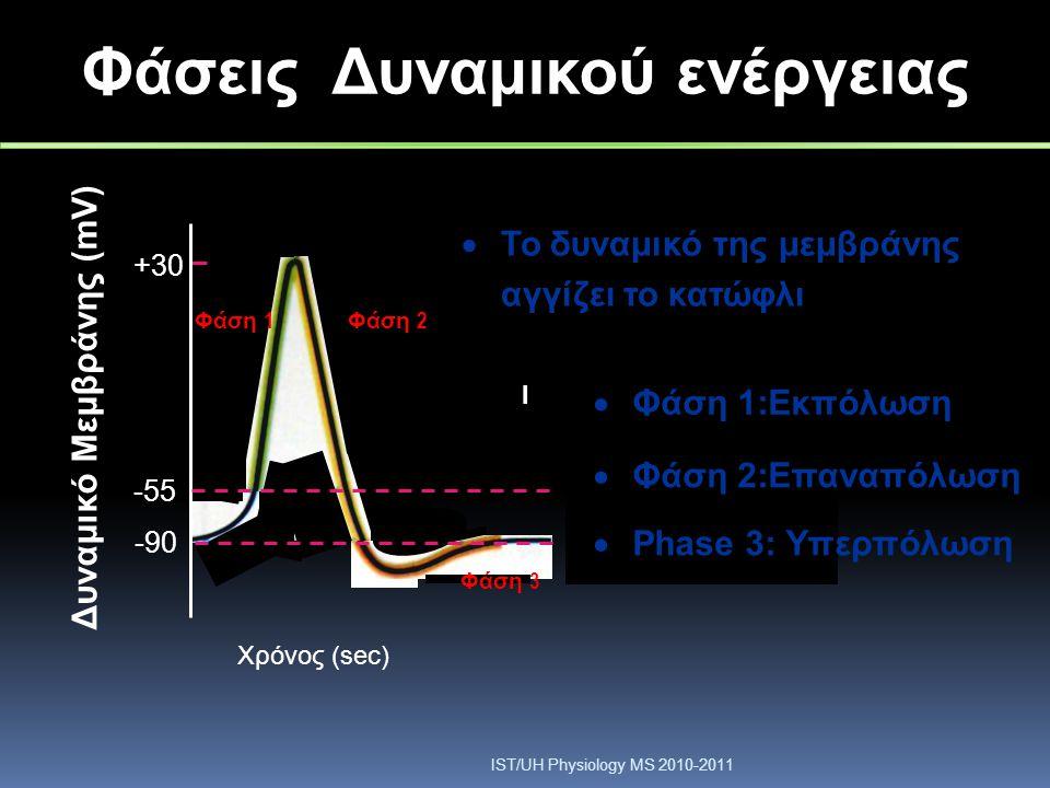 Δυναμικό Μεμβράνης (mV) -55 +30 -90-90 Φάση 1 Φάση 2 Φάση 3 Threshold Resting potential Φάσεις Δυναμικού ενέργειας  Το δυναμικό της μεμβράνης αγγίζει