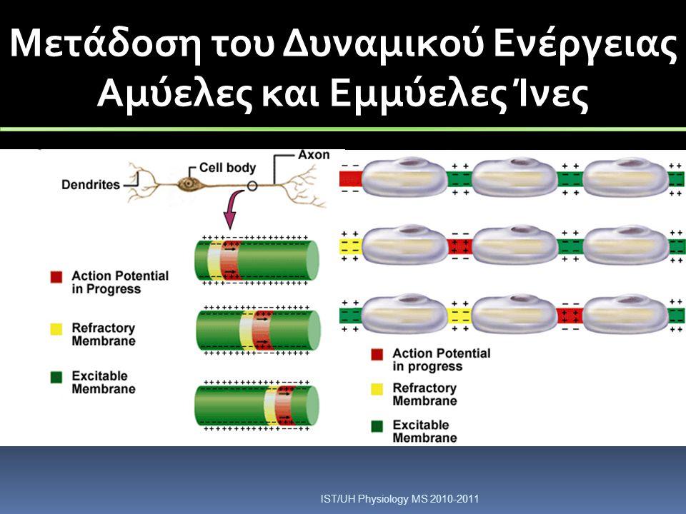 Μετάδοση του Δυναμικού Ενέργειας Αμύελες και Εμμύελες Ίνες IST/UH Physiology MS 2010-2011
