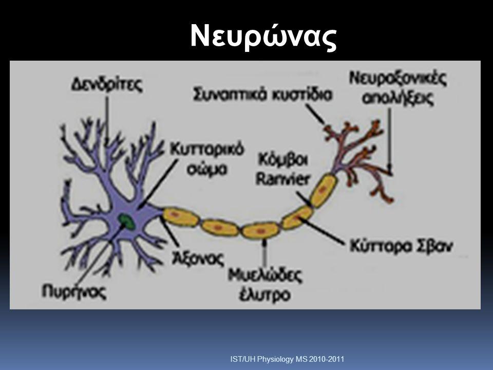 Μετάδοση του Δυναμικού Ενέργειας - Εμμύελες Ίνες  Το έλυτρο της μυελίνης δρα ως ηλεκτρική μόνωση και αποτρέπει τη διαρροή φορτίου από τον νευράξονα  Η αγωγή του ρεύματος γίνεται μόνο στο ύψος των κόμβων του Ranvier  Η αγωγή είναι πολύ ταχύτερη (5 έως 50 φορές) σε σχέση με κάποιο αμύελο άξονα IST/UH Physiology MS 2010-2011