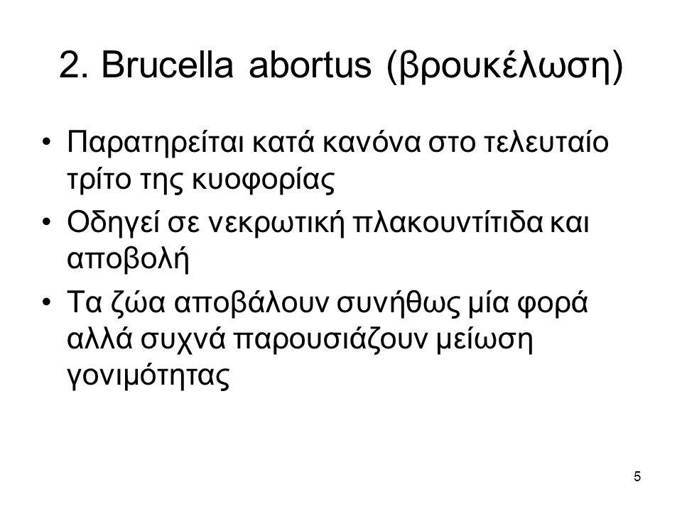 5 2. Brucella abortus (βρουκέλωση) Παρατηρείται κατά κανόνα στο τελευταίο τρίτο της κυοφορίας Οδηγεί σε νεκρωτική πλακουντίτιδα και αποβολή Τα ζώα απο