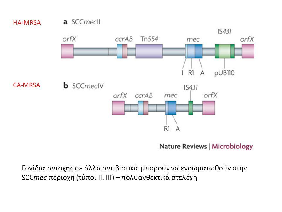 Γονίδια αντοχής σε άλλα αντιβιοτικά μπορούν να ενσωματωθούν στην SCCmec περιοχή (τύποι II, III) – πολυανθεκτικά στελέχη HA-MRSA CA-MRSA