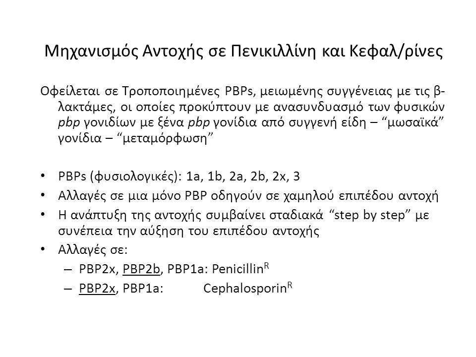 Μηχανισμός Αντοχής σε Πενικιλλίνη και Κεφαλ/ρίνες Οφείλεται σε Τροποποιημένες PBPs, μειωμένης συγγένειας με τις β- λακτάμες, οι οποίες προκύπτουν με α