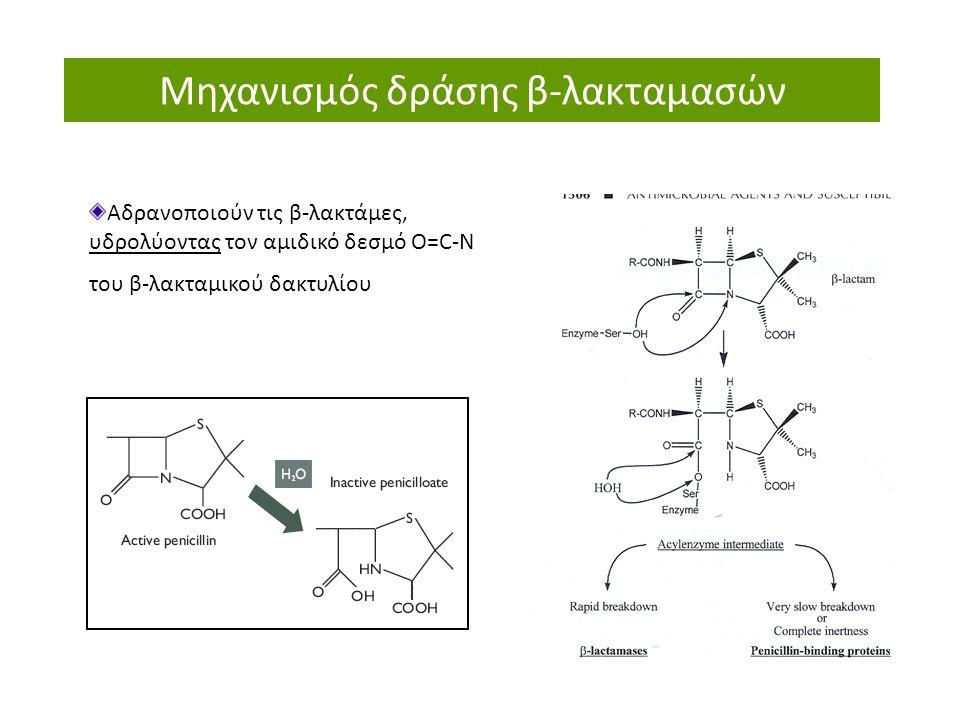 Μηχανισμός δράσης β-λακταμασών Αδρανοποιούν τις β-λακτάμες, υδρολύοντας τον αμιδικό δεσμό O=C-N του β-λακταμικού δακτυλίου