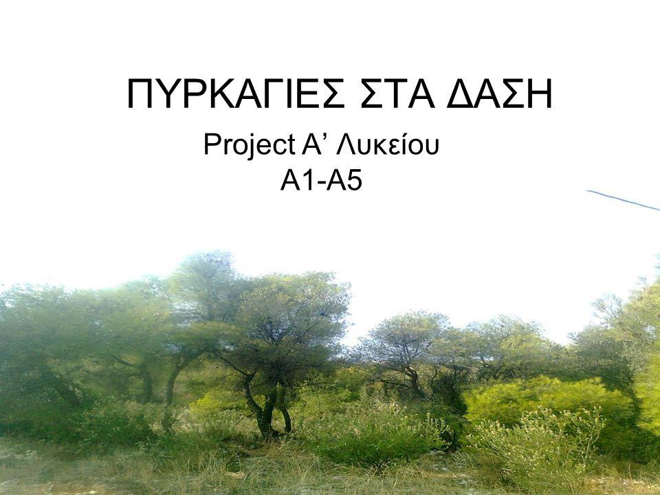 ΠΥΡΚΑΓΙΕΣ ΣΤΑ ΔΑΣΗ Project Α' Λυκείου Α1-Α5