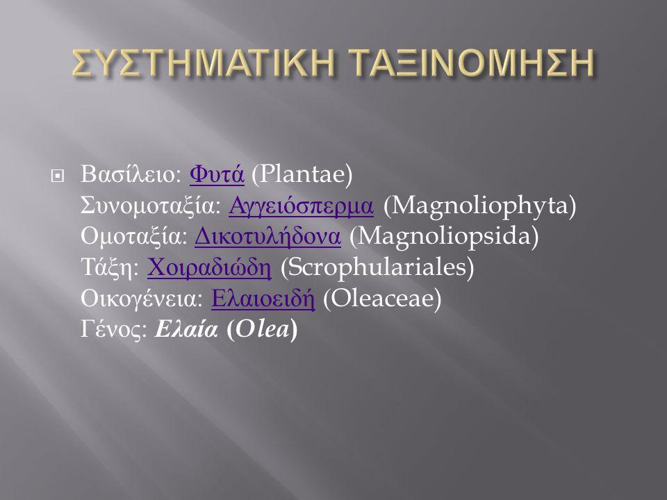  Βασίλειο : Φυτά (Plantae) Συνομοταξία : Αγγειόσπερμα (Magnoliophyta) Ομοταξία : Δικοτυλήδονα (Magnoliopsida) Τάξη : Χοιραδιώδη (Scrophulariales) Οικ