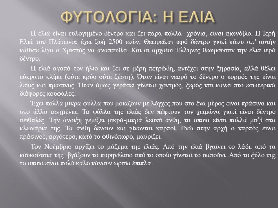Η ελιά είναι ευλογημένο δέντρο και ζει πάρα πολλά χρόνια, είναι αιωνόβιο. Η Ιερή Ελιά του Πλάτωνος έχει ζωή 2500 ετών. Θεωρείται ιερό δέντρο γιατί κάτ