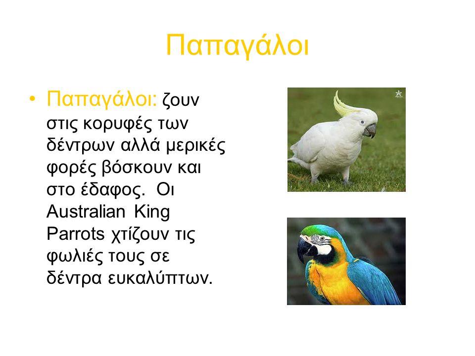 Παπαγάλοι Παπαγάλοι: ζουν στις κορυφές των δέντρων αλλά μερικές φορές βόσκουν και στο έδαφος.