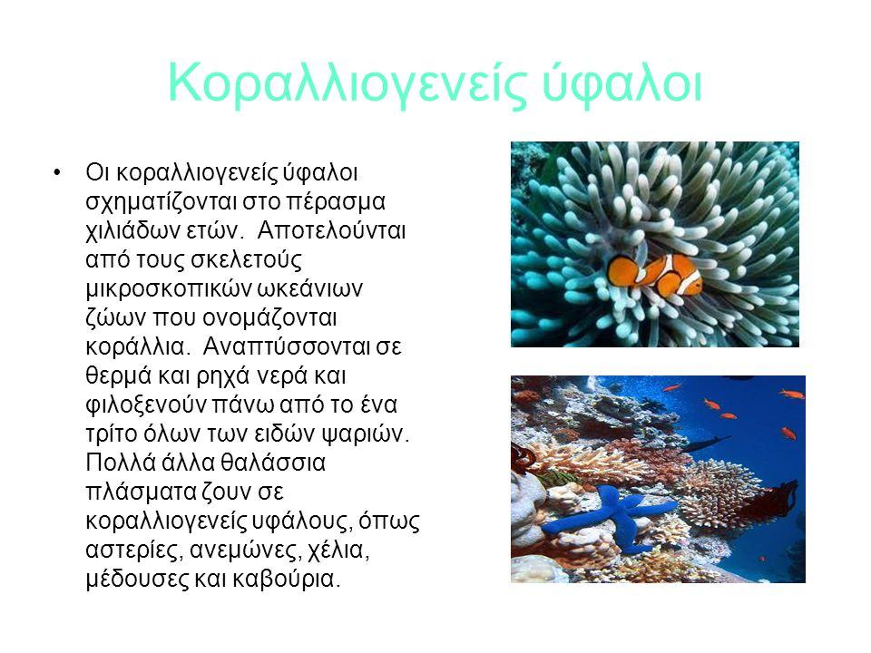 Κοραλλιογενείς ύφαλοι Οι κοραλλιογενείς ύφαλοι σχηματίζονται στο πέρασμα χιλιάδων ετών.