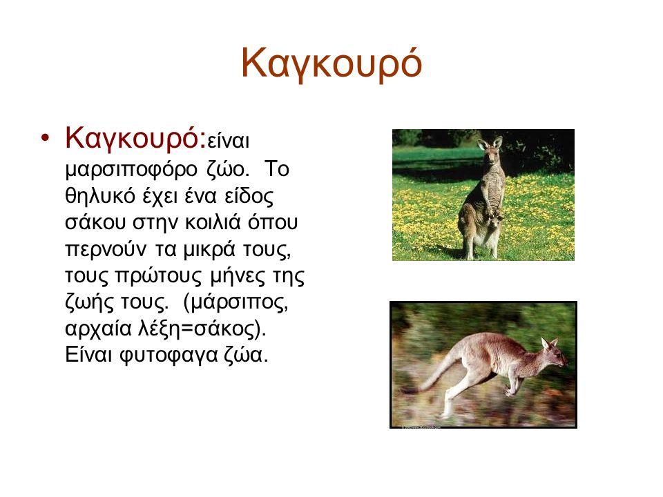 Καγκουρό Καγκουρό: είναι μαρσιποφόρο ζώο.