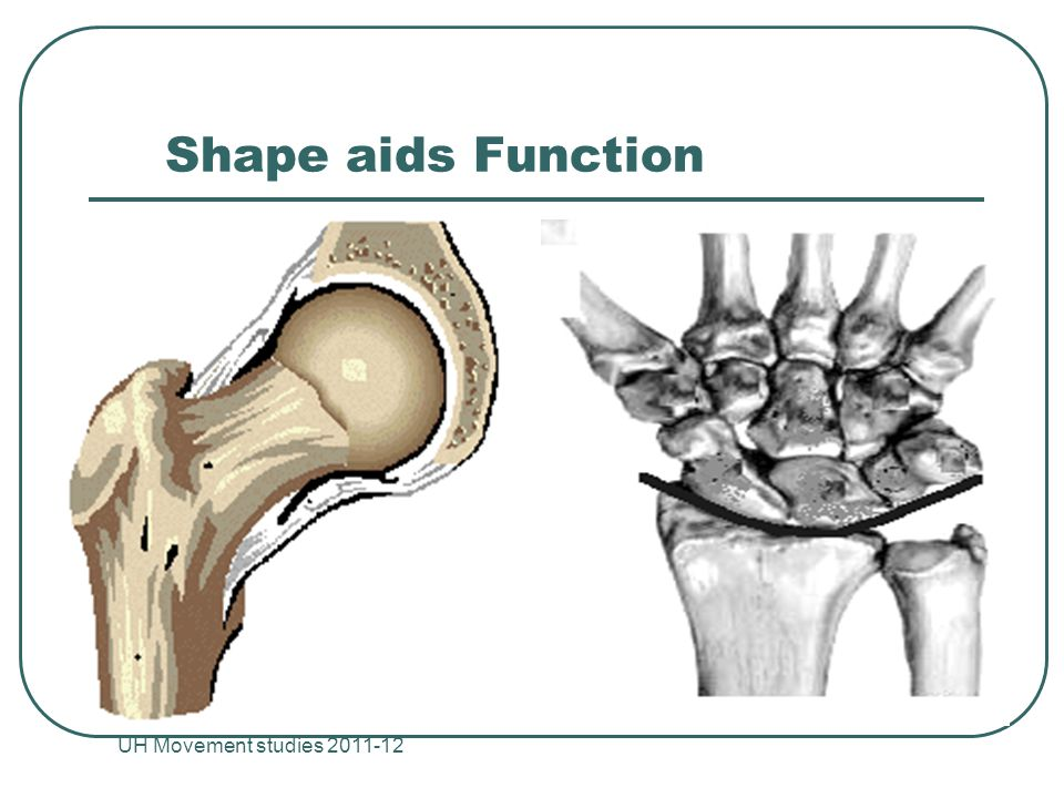 Shape aids Function UH Movement studies 2011-12 23