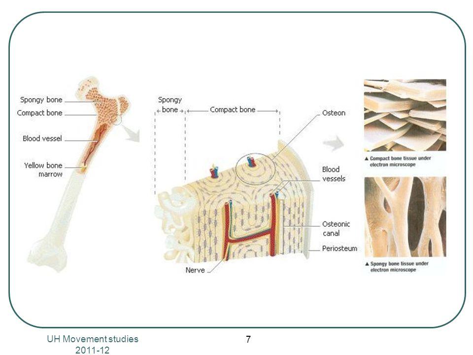 UH Movement studies 2011-12 18 Κατηγορίες Περιορισμένη κίνηση – συνάρθρωση Ινώδης συγχόνδρωση Ελεύθερη κίνηση Διάρθρωση