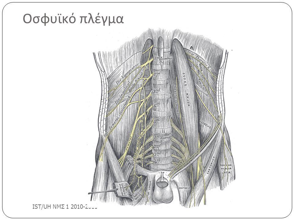 Οσφυϊκό πλέγμα IST/UH ΝΜΣ 1 2010-2011