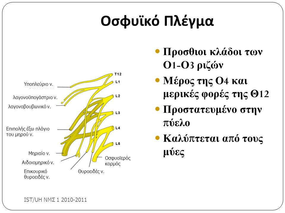 Οσφυϊκό Πλέγμα Προσθιοι κλάδοι των Ο 1- Ο 3 ριζών Μέρος της Ο 4 και μερικές φορές της Θ 12 Προστατευμένο στην π ύελο Καλύ π τεται α π ό τους μύες IST/